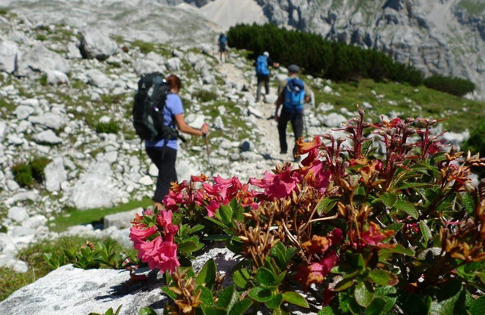 Der Bergwanderführer erklärt auf der Alpenüberquerung auch sehr viel zu Flora und Fauna